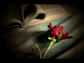 Alariwo Poetry: Love Isn't Dead